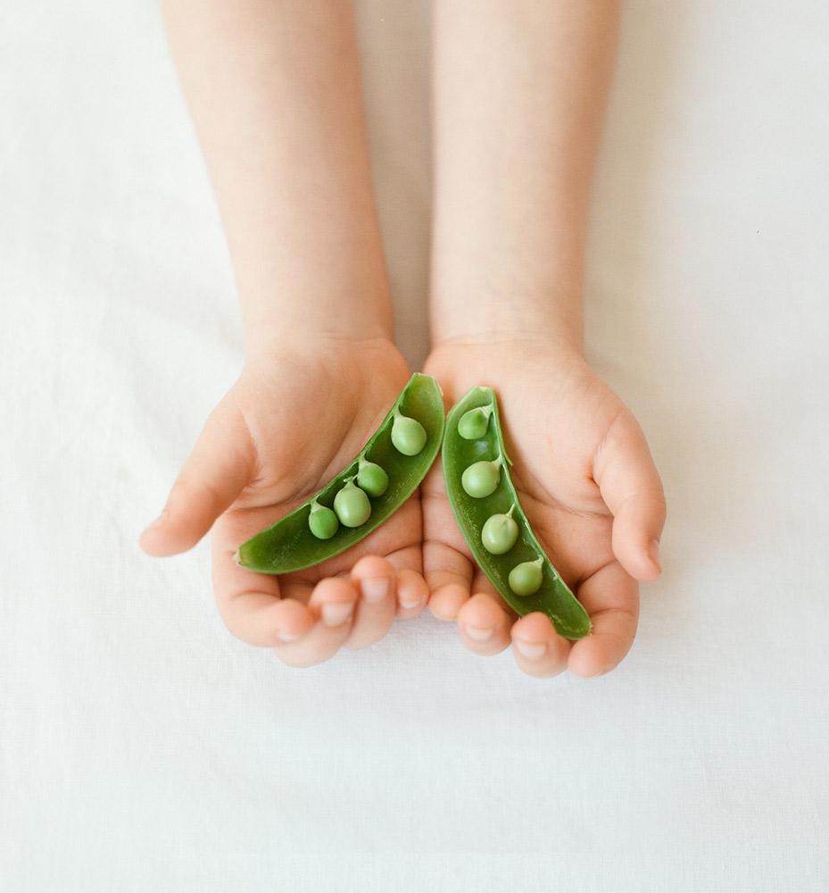 φυτικές ίνες αρακά pea συστατικά φυτικών πρωτεΐνών