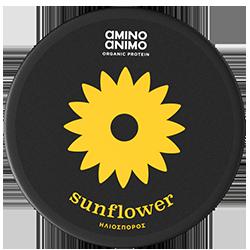 amino-animo-sunflower-closed